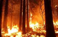 Площадь лесных пожаров в Калифорнии превысила 1,6 млн гектаров