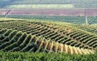 Молдавия меняет названия алкогольной продукции