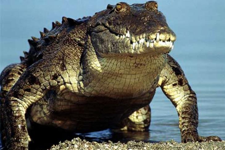 100 млн лет назад картинки рептилии