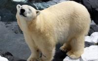 Белая медведица умерла в зоопарке от тоски по подруге