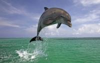 Дельфины подсказали ученым способ обнаружения взрывных устройств